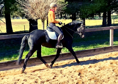 Horse Training Southern Highlands